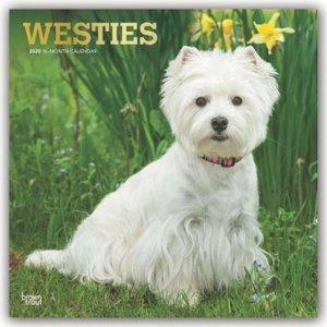 West Highland White Terriers - Westies 2020 - 18-Monatskalender