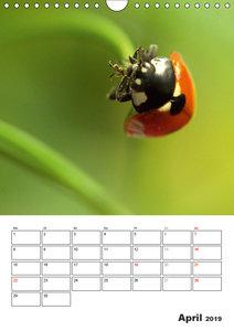 Marienkäfer - Der Geburtstagskalender (Wandkalender 2019 DIN A4