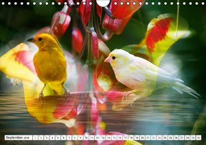 Tropenbewohner - farbenfrohe Vögel