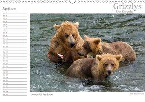 Grizzlys - Der Kalender