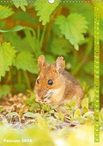 Zauberhafte Mäuse: Von wegen nur Grau (Wandkalender 2019 DIN A3