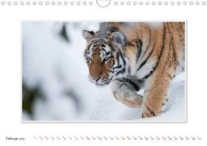 Emotionale Momente: Tiger - Kraft & Schönheit. / CH-Version