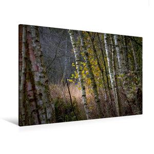 Premium Textil-Leinwand 120 cm x 80 cm quer Pennigbüttler Moor -