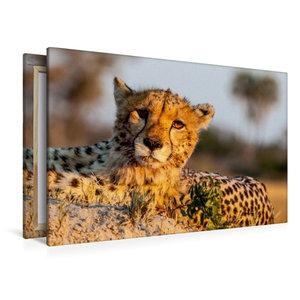 Premium Textil-Leinwand 120 cm x 80 cm quer Gepard
