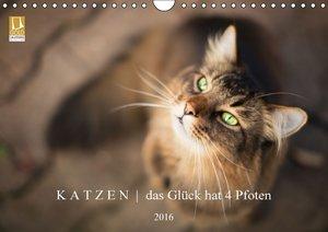 K A T Z E N das Glück hat 4 Pfoten (Wandkalender 2016 DIN A4 que