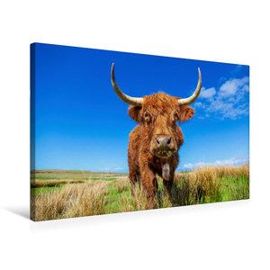 Premium Textil-Leinwand 75 cm x 50 cm quer Highland Kuh