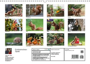 Eichhörnchen-Spaß
