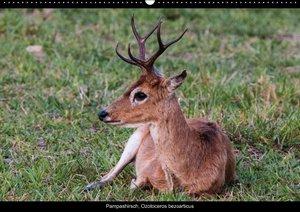 Tiere des Pantanal (PosterbuchDIN A4 quer)
