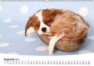 Süße Träume 2019 - schlafende Hundewelpen (Wandkalender 2019 DIN