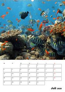 Zauberwelt. Fische, Korallen und Co.