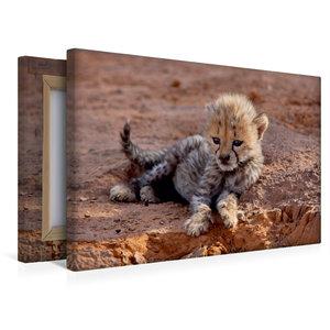 Premium Textil-Leinwand 45 cm x 30 cm quer Gepardenbaby