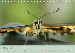 Edelfalter - 2 - (Tischkalender 2019 DIN A5 quer)