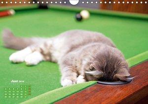 Katzen-Leben: Lustiger Haustiger