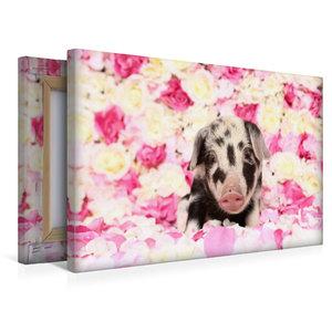Premium Textil-Leinwand 45 cm x 30 cm quer Turopolje Ferkel / Tu