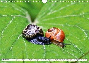 Liebe, Lust und Leidenschaft im Tierreich