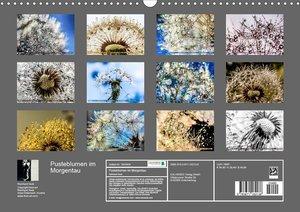 Pusteblumen im Morgentau (Wandkalender 2020 DIN A3 quer)
