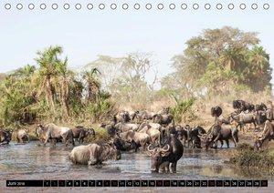 Weites Land - Safari in der Serengeti (Tischkalender 2018 DIN A5