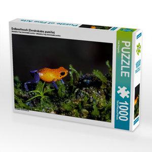 Erdbeerfrosch (Dendrobates pumilio) 1000 Teile Puzzle quer