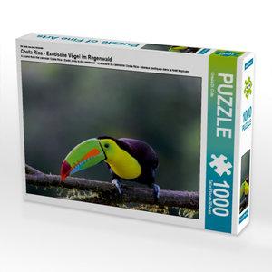 Ein Motiv aus dem Kalender Costa Rica - Exotische Vögel im Regen