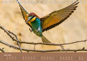 Vogelflug-Faszination