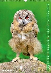 Die Eulen sind los: Edition lustige Tiere (Wandkalender 2019 DIN