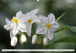 Blüteneleganz in Weiß (Wandkalender 2019 DIN A2 quer)
