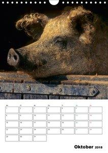 Schweine 2018