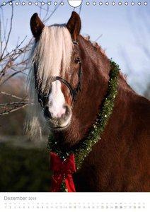 Schwarzwälder Kaltblut Pferde im Portrait