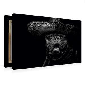 Premium Textil-Leinwand 75 cm x 50 cm quer Bulldogge Molosser Bi