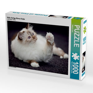 Süße Heilige Birma Katze 1000 Teile Puzzle quer