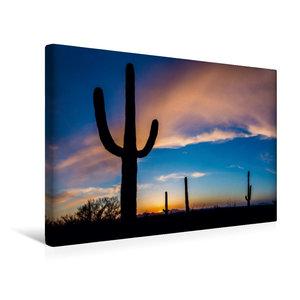 Premium Textil-Leinwand 45 cm x 30 cm quer Saguaro Nationalpark