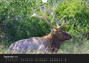 West-Kanada (Wandkalender 2019 DIN A4 quer)