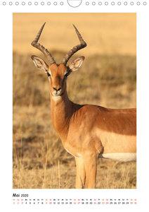 SÜDAFRIKA - WILDTIERE IM PORTRAIT (Wandkalender 2020 DIN A4 hoch