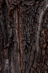 Premium Textil-Leinwand 60 cm x 90 cm hoch BÄUME DER ERDE - DIE