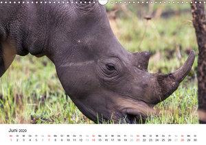 Dickhäuter in Uganda - Flußpferde, Nashörner und Elefanten