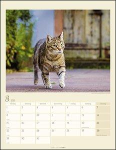 Katzen auf dem Lande Kalender 2021