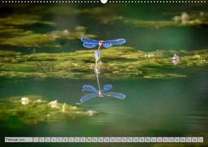 Farbenvolle Pracht der Libellen (Wandkalender 2020 DIN A2 quer)