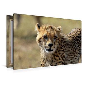 Premium Textil-Leinwand 120 cm x 80 cm quer Gepardin Malaika