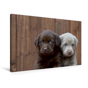 Premium Textil-Leinwand 90 cm x 60 cm quer Labrador Geschwister
