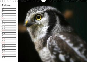 Greifvögel, Eulen und Käuze (Wandkalender 2019 DIN A3 quer)