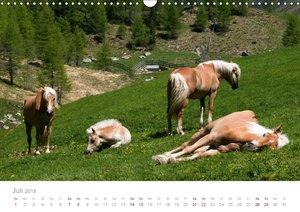 Tiere in Freiheit - Nutztiere auf der Alm