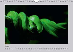 World of Snakes - UK Version (Wall Calendar perpetual DIN A4 Lan