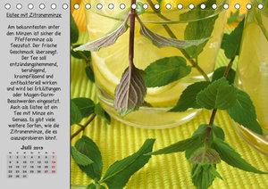 Eine kleine Teekunde - Zwölf Teesorten im Porträt (Tischkalender