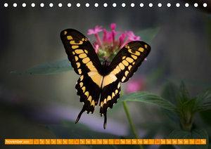 Schmetterlinge im Maxipark in Hamm
