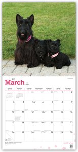 Scottish Terriers - Scottish Terrier 2019 - 18-Monatskalender mi