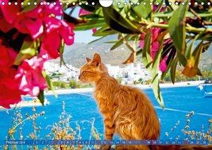 Katzen in Griechenland