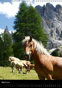 Mit Pferden durch das Jahr