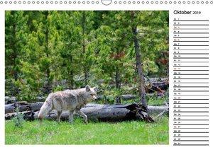 Tiere der Great Plains (Wandkalender 2019 DIN A3 quer)