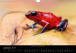 Costa Rica - Reptilien und Amphibien