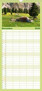 Wunderschöne Haflingerwelt - Familienplaner hoch (Wandkalender 2